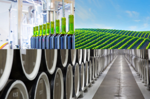 What is Winery Wastewater?