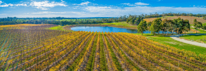 How to Remove Sludge from Your Winery Pond?
