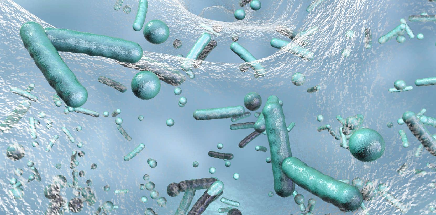 You are currently viewing Which Microbes Help in Sewage Treatment?